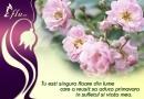 Felicitare Singura floare
