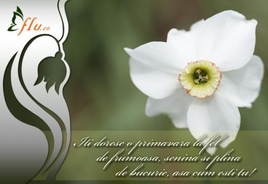 Felicitare - Narcisa - Felicitari 1 Martie - Felicitari.flu.ro