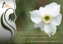 Felicitare Narcisa