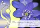Felicitare Cele mai frumoase flori!