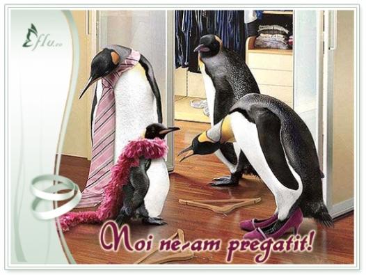 Felicitare - Pregatiri de nunta - Felicitari Nunta - Felicitari.flu.ro