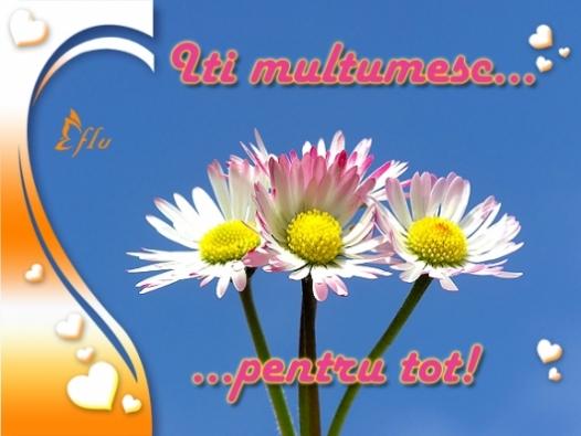 Felicitare - Multumesc - Felicitari Declaratii - Felicitari.flu.ro