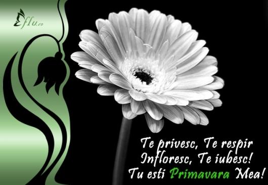 Felicitare - Primavara mea - Felicitari 1 Martie - Felicitari.flu.ro