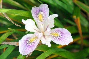 Iris: 5, 14, 23