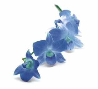 Orhidee: 7, 16, 25
