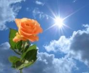 Vraja iubirii cu petale de flori