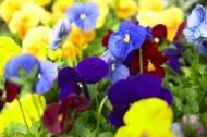 Florile care atrag iubirea